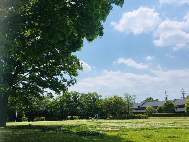 鈴の森公園クローバー青空