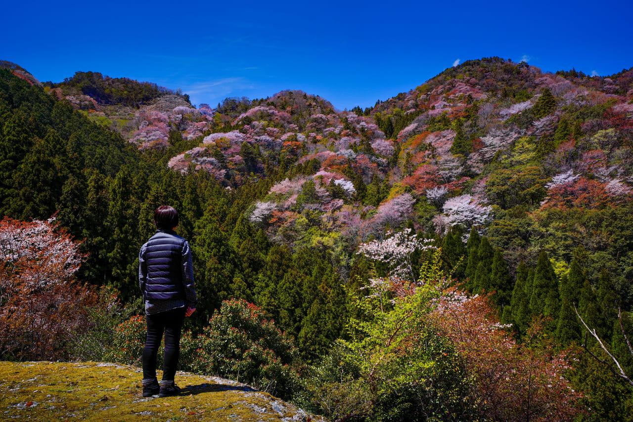 大台町の峠から見る桜‐三重フォトギャラリー